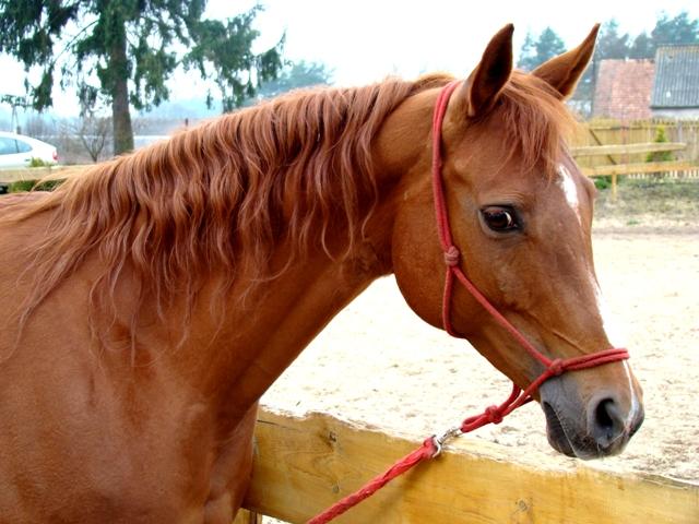 karnet nauki jazdy konnej