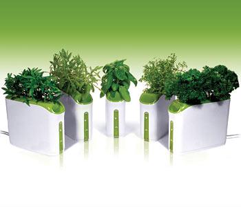 Fabryka roślin