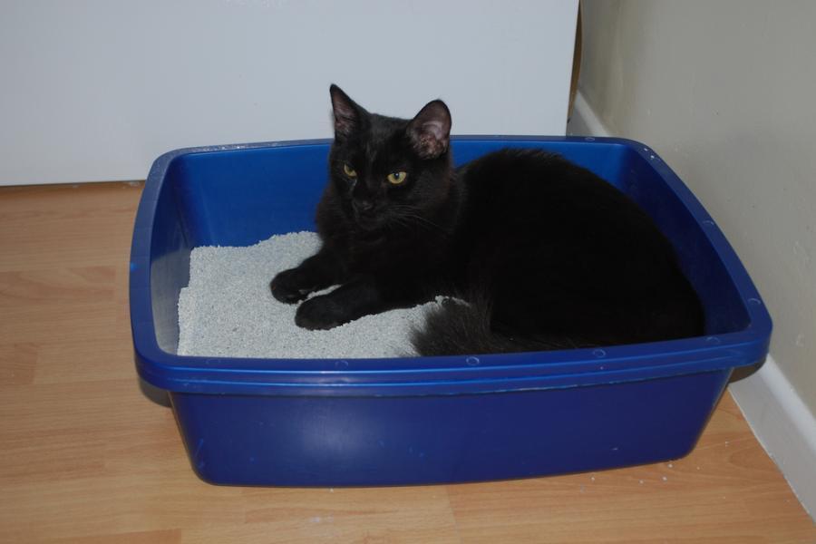 Kuweta dla kota - jaką kuwetę dla kota wybrać? RANKING 2019