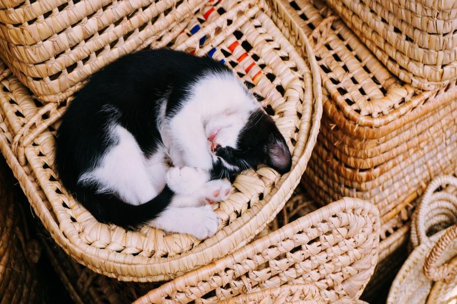 Legowisko dla kota - jakie wybrać? RANKING 2019