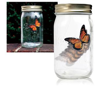 Motylek w słoiku