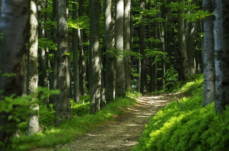 Trasa rowerowa po Beskidzie Śląskim