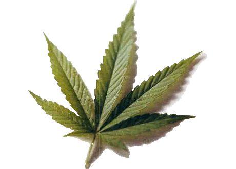 Doniczka z Marihuaną