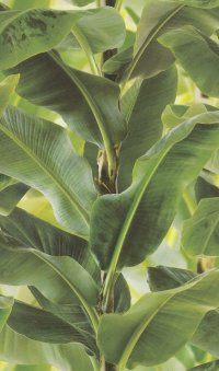 Tapeta z fajnym motywem roślinnym