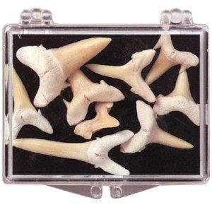 Zęby rekina