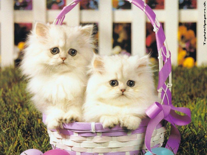 słodkie kotki