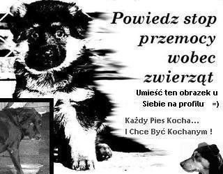 powiedz STOP przemocy wobec zwierząt!