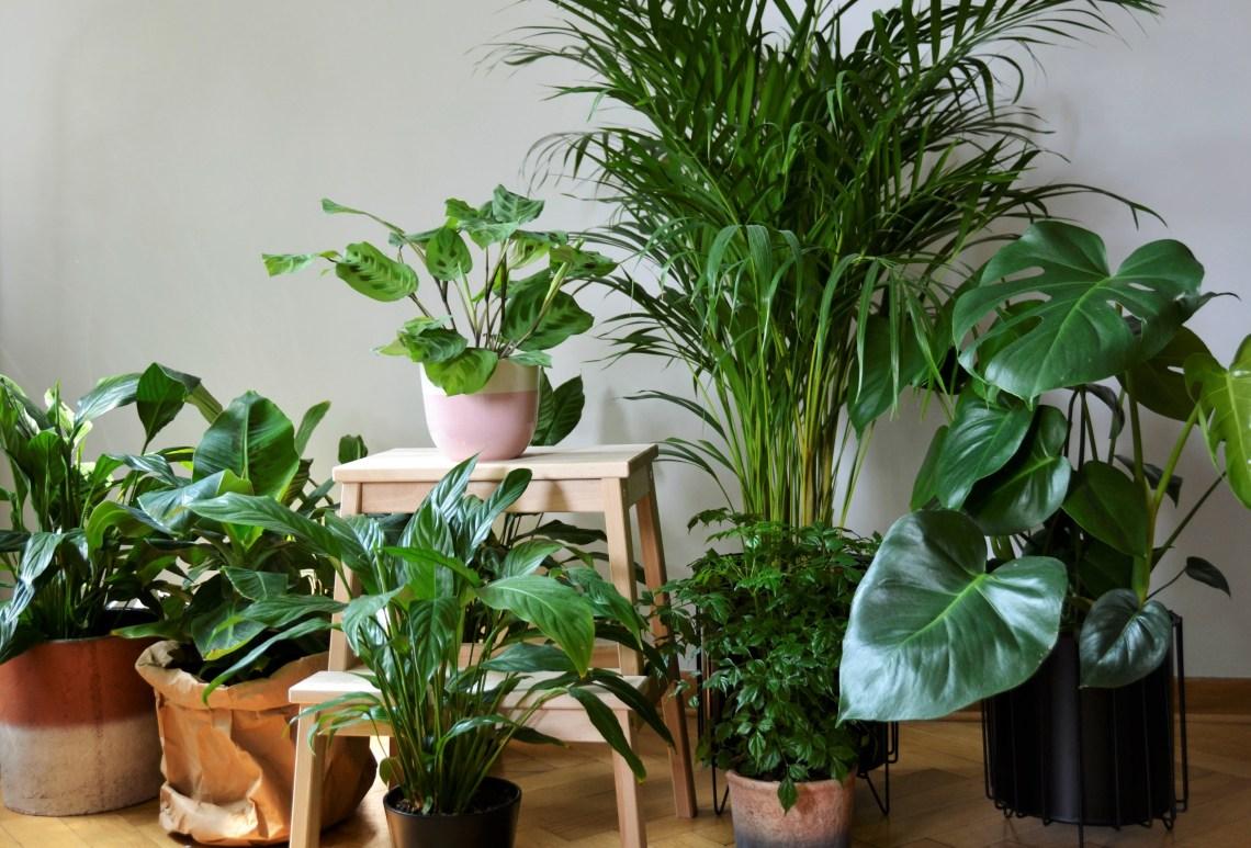 Roślinka na parapet