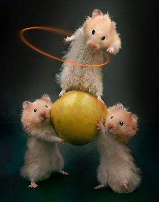 Mysz lub szczurek ; ))