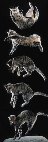 Plakat - spadający kot ;)