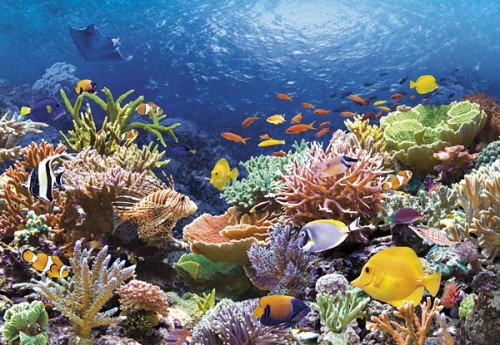kurs nurkowania- rafa koralowa