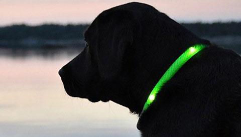 Pezent numer 1 !!! Obroża LED dla psa w ładnym kolorze (zielony/niebieski)