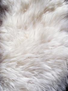 biały dywan z długim włsiem