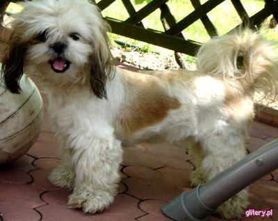 chce żeby mój pies pojechał zemną na ferie!