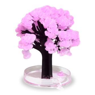 Japońskie drzewko sakura
