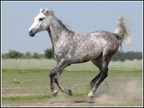 Własny koń