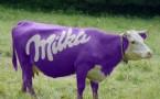 Zobaczyć krowę Milkę