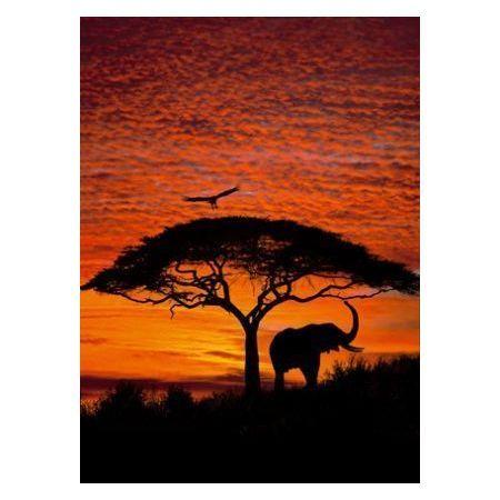 Wycieczka do Afryki