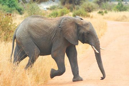wycieczka na słoniu do niemiec