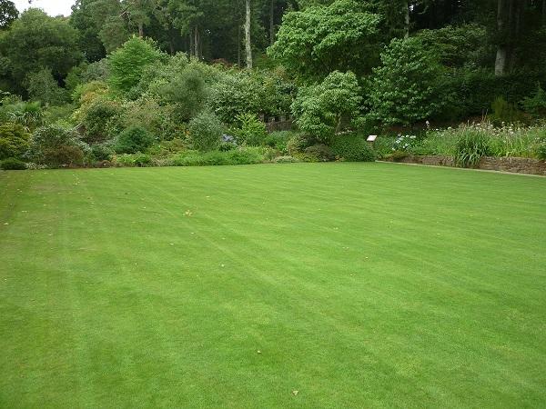 Jaką kosiarkę do trawy wybrać?