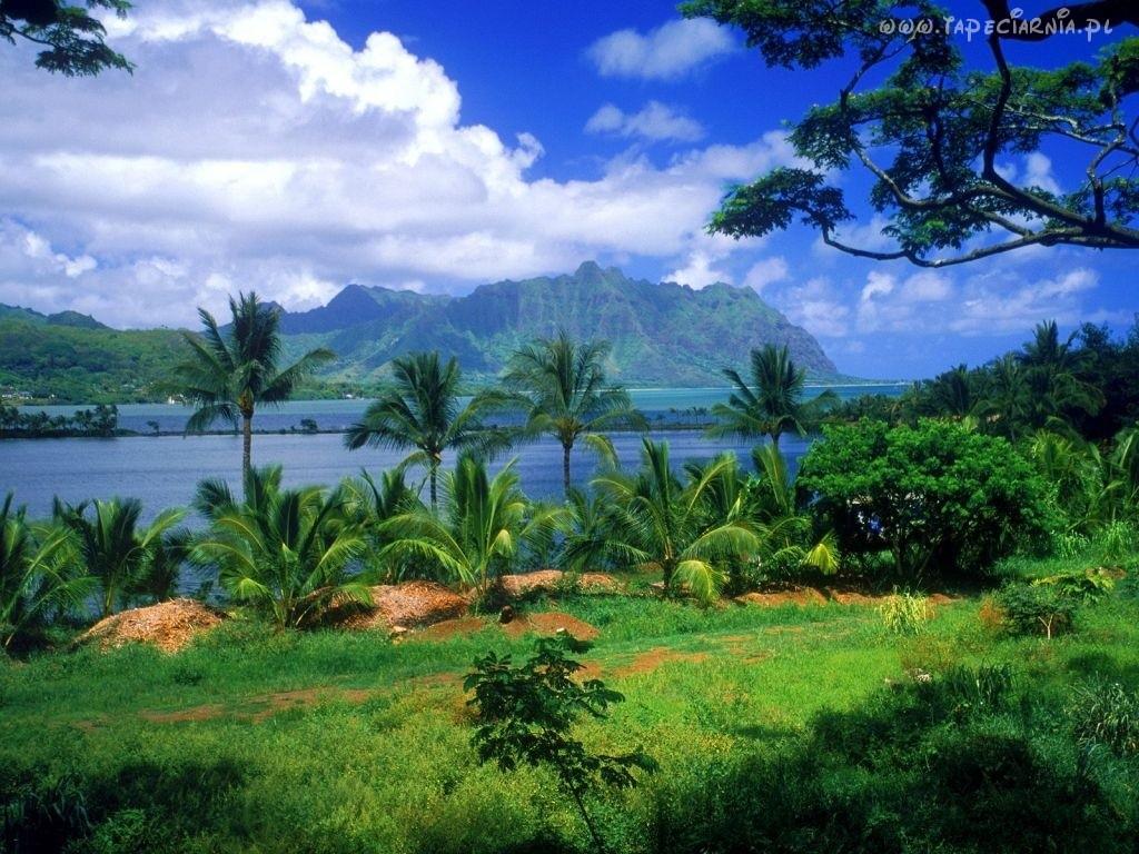 Wyjazd na Hawaje