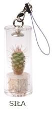 Kieszonkowy kaktuss