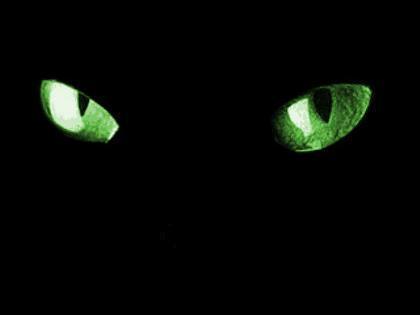 Oczy kota