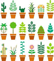 Roślina na parapet