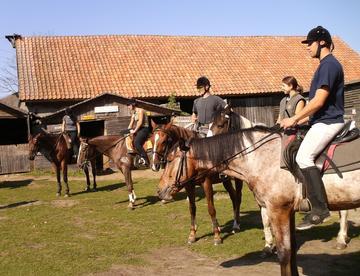 Kursy jazdy konnej