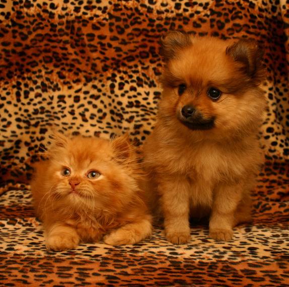 Kot i Pies w domu