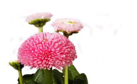 Kwiaty dane ze szczerego serca