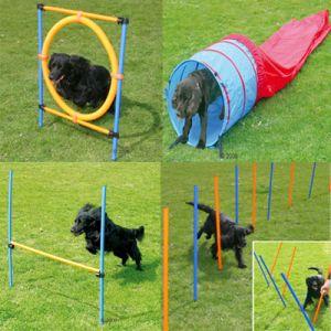 Zestaw agility dla psa