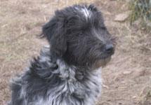 Należeć do fundacji pomocy i opieki nad zwierzętami