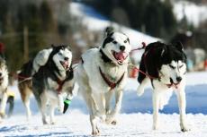 Wyprawa psim zaprzęgiem- husky adventure