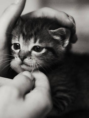 szarego kotka