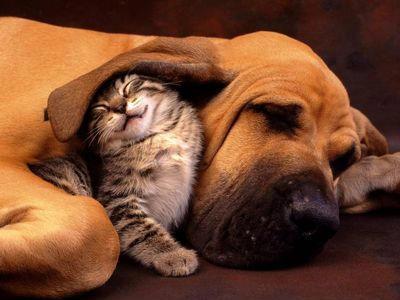 słodki kotek i piesek